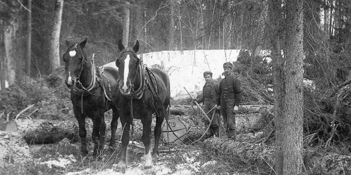 Lumber 1890